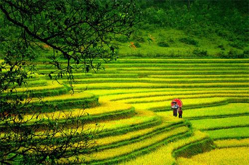Tours in Sapa - Vietnam